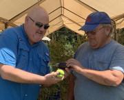 Morrison Tomato Farm 2019 (15)